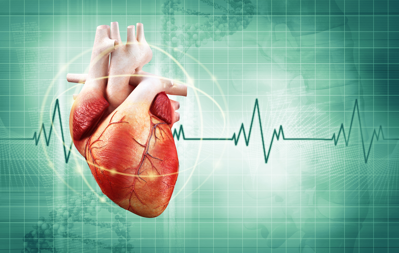 10 curiosidades sobre el corazón que no conocías5 (6)